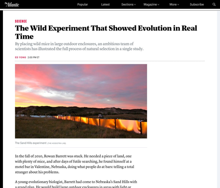 The Wild Experiment That Showed Evolution in Real Time