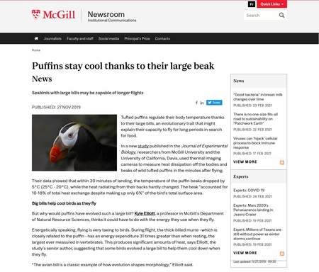 Puffins stay cool thanks to their large beak