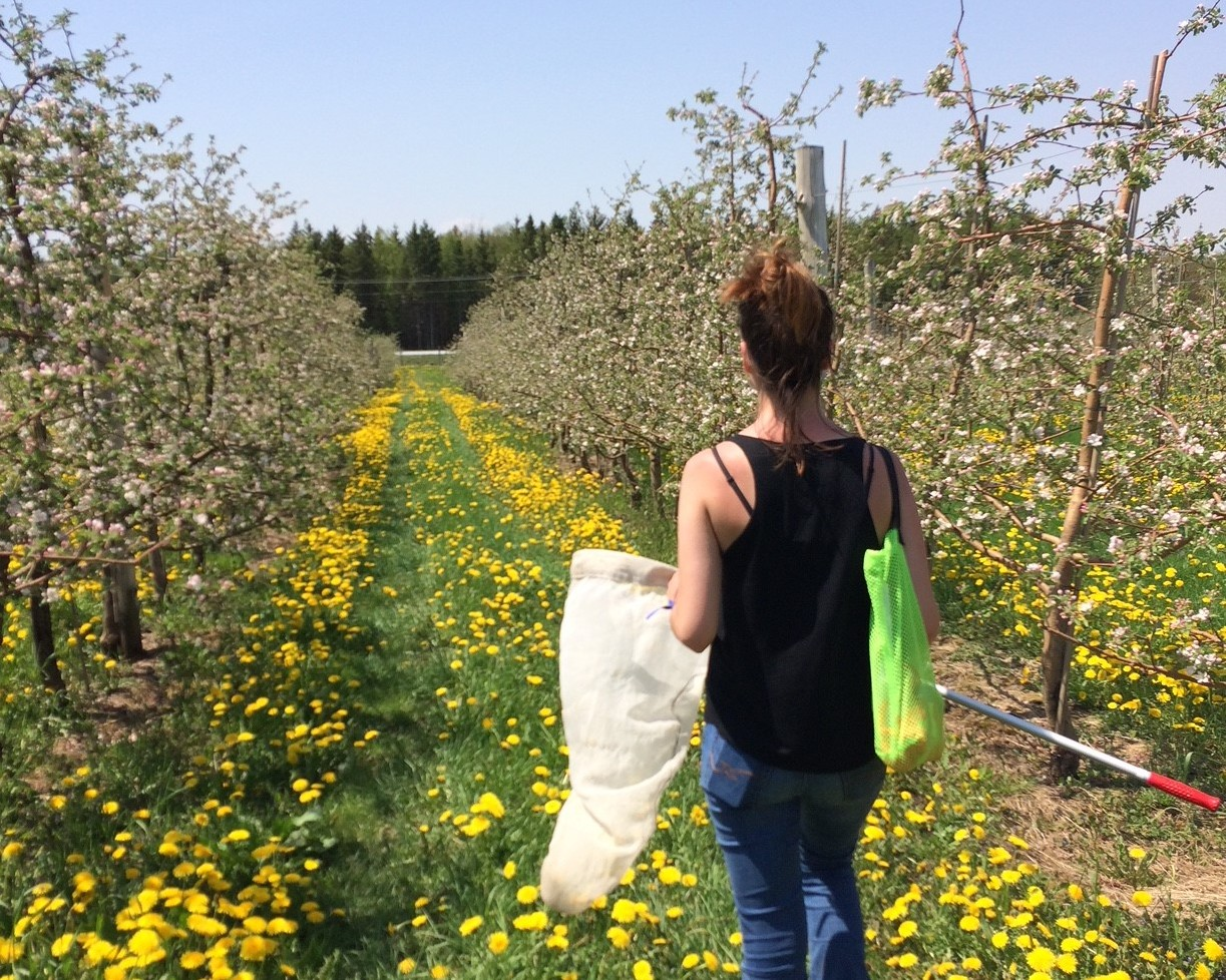 Habitat enhancements to support pollinators in apple production